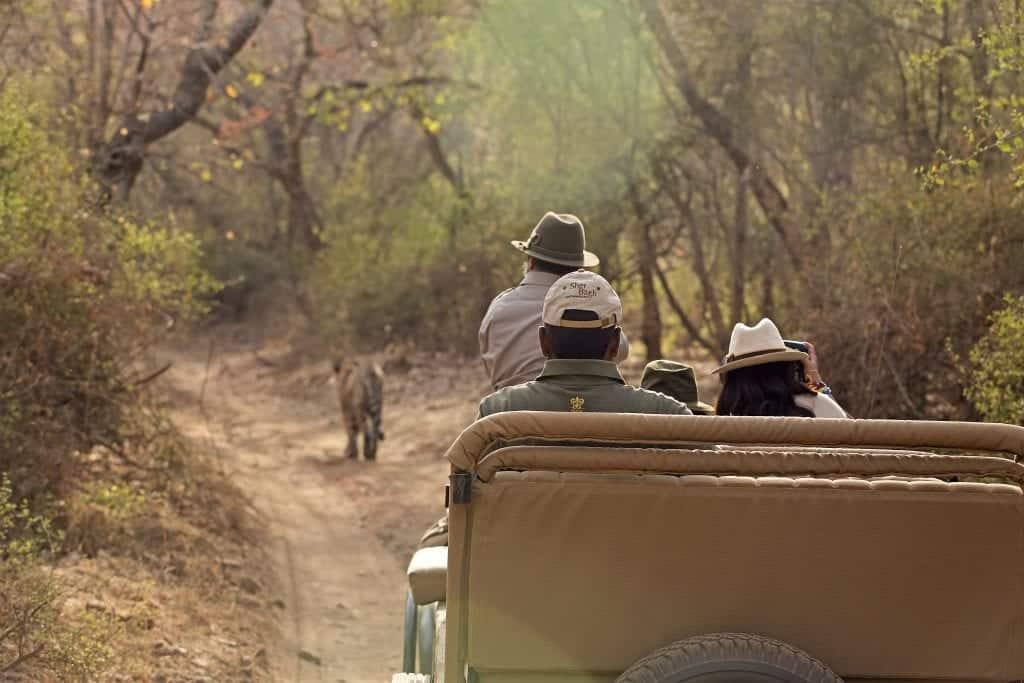 on safari in ranthambore national park