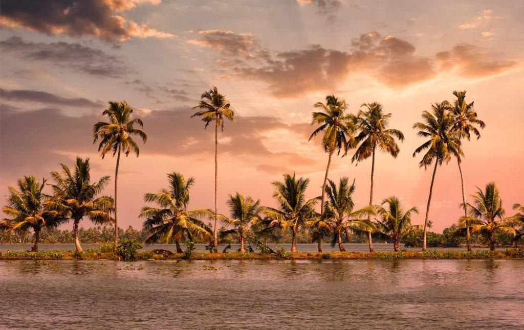 palm trees, kerala, india