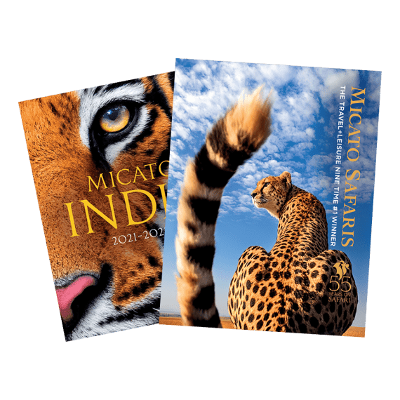 Africa Brochure 2021 - 2022