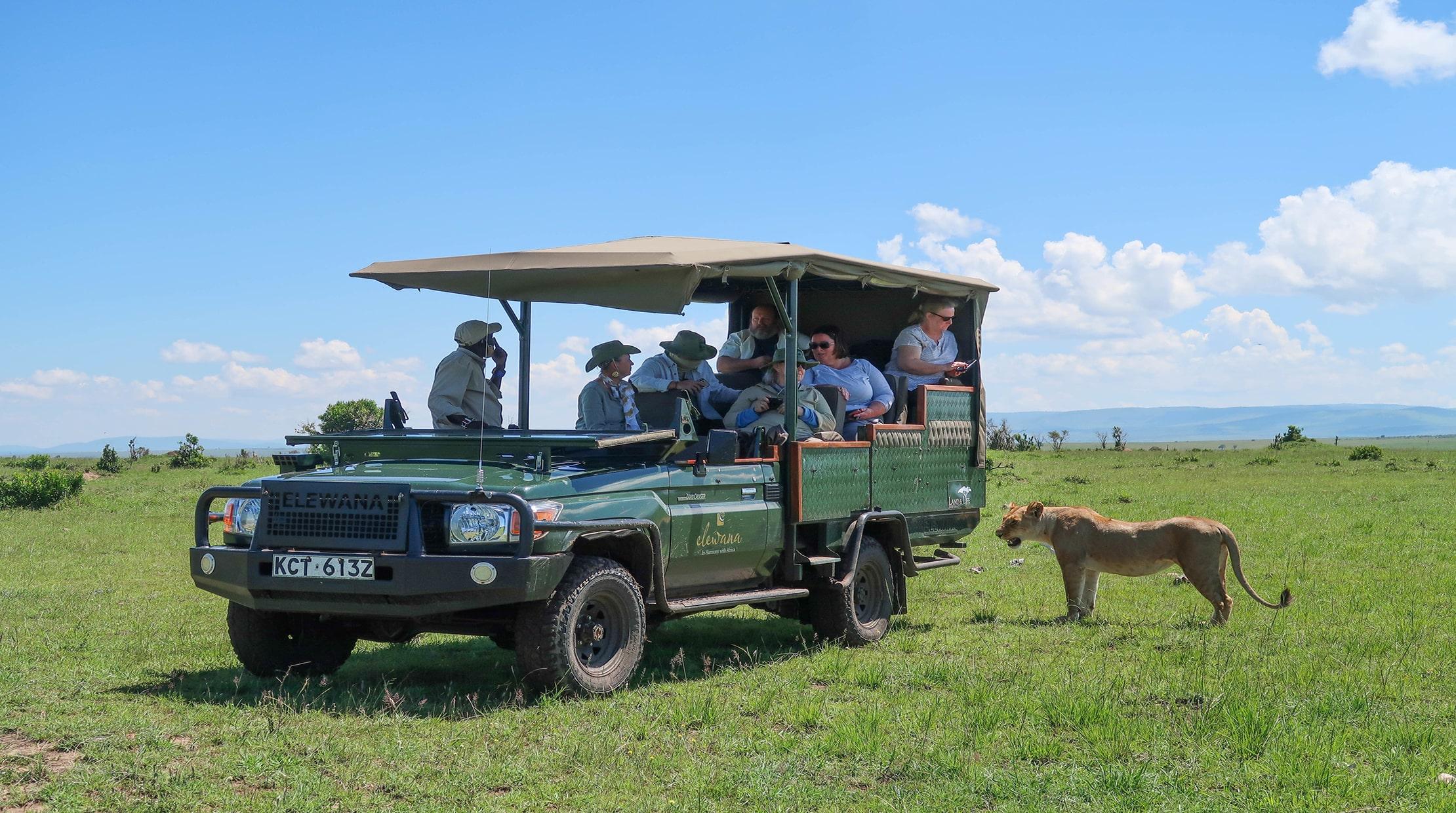safari vehicle with passengers near lion