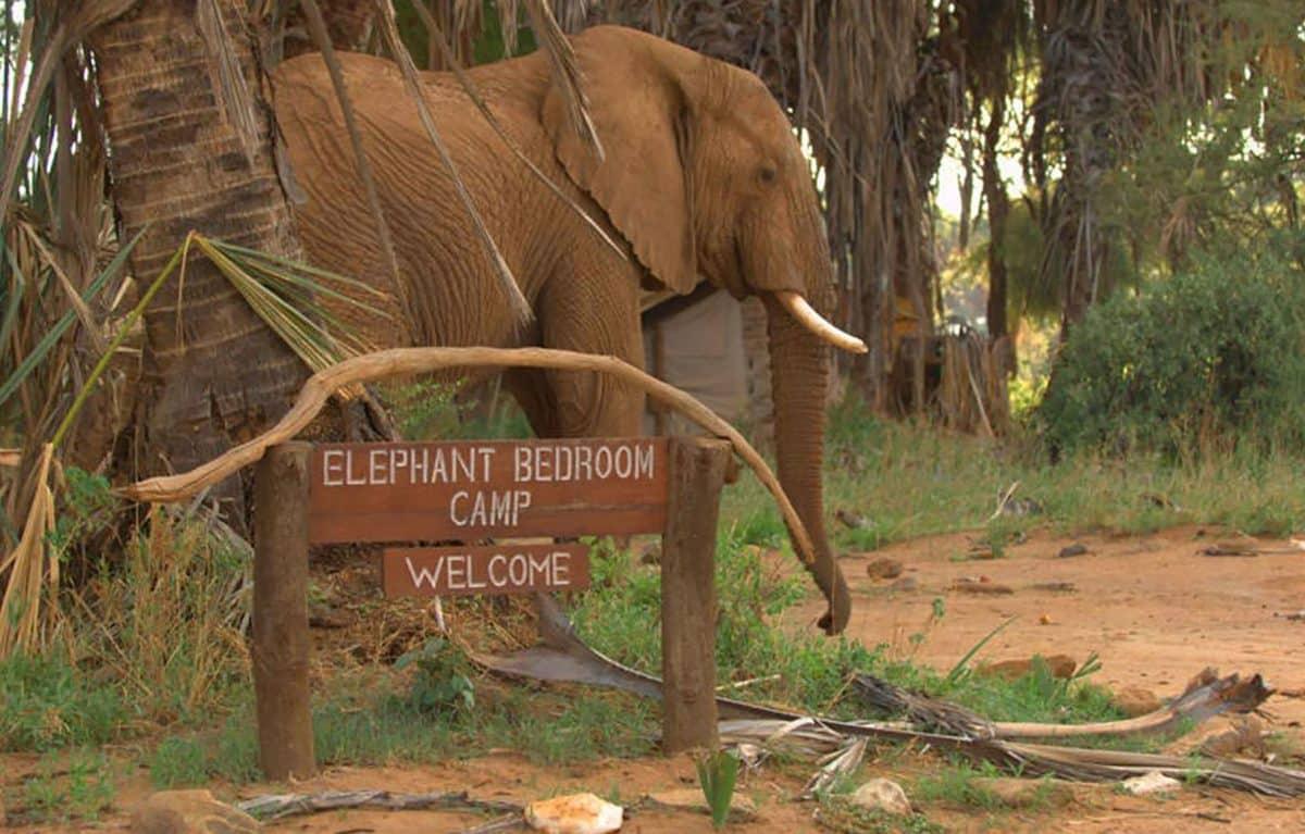An elephant near the welcome sign.