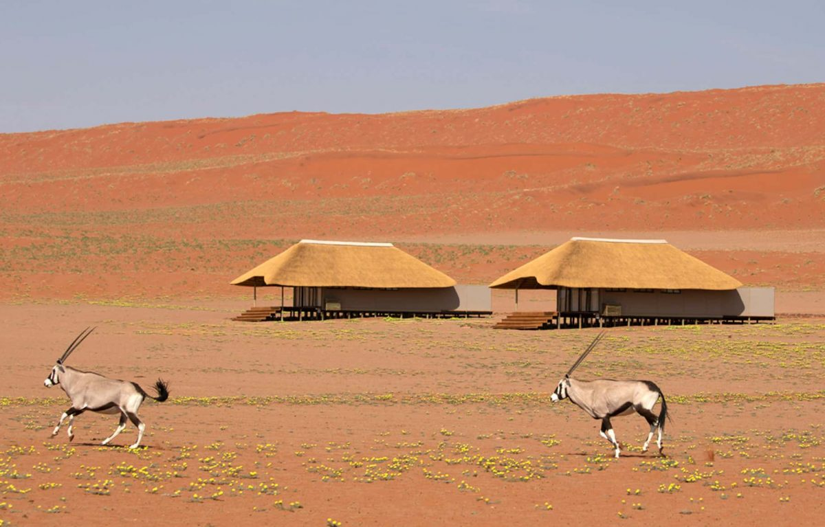Two animals running across the open land with two tents in the background.