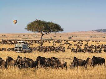 Micato safari vehicle with balloon and wildebeest