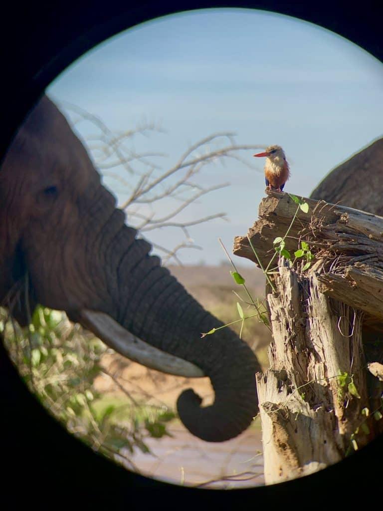 bird and elephant